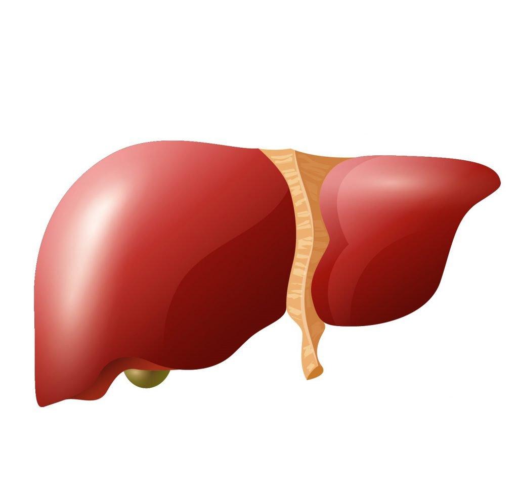 Vermoeidheidssyndroom lever