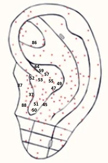 auriculaire-punten